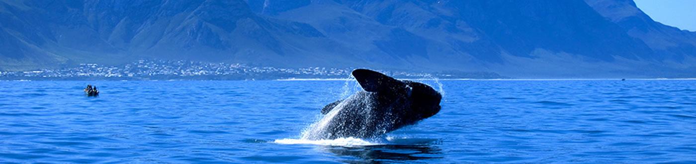 whale-tour-banner