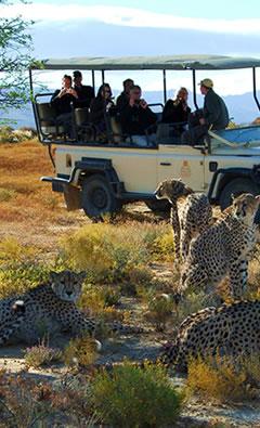 wildlife-safari-tour
