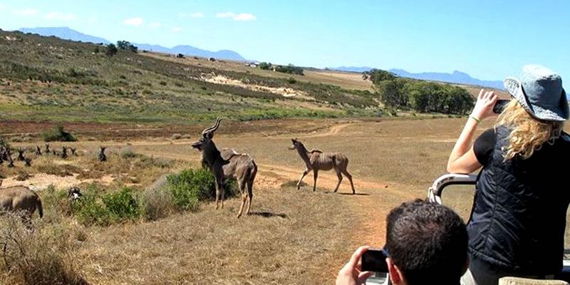 Wildlife Safari Tour AfriVest Travel