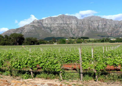 winelands1