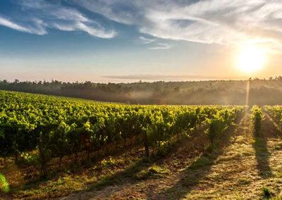 winelands11