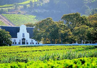 winelands4