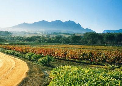 winelands9